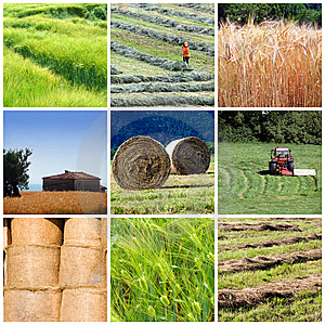 Agriculture Sector in Pakistan Problems & Importance