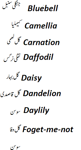 names of flowers in english and urdu with pictures o1