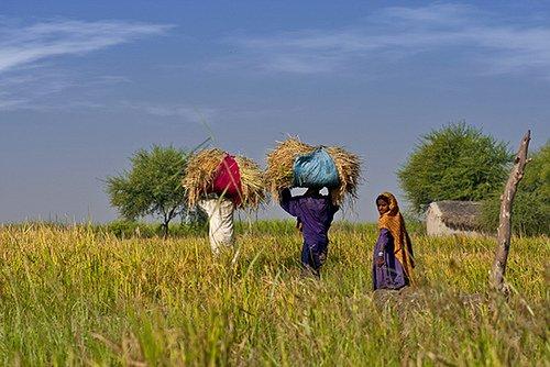 Pakistan people lifestyle