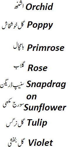 names of flowers in english and urdu with pictures
